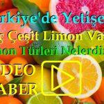 Türkiye'de Yetişen Kaç Çeşit Limon Var? Limon Türleri Nelerdir?