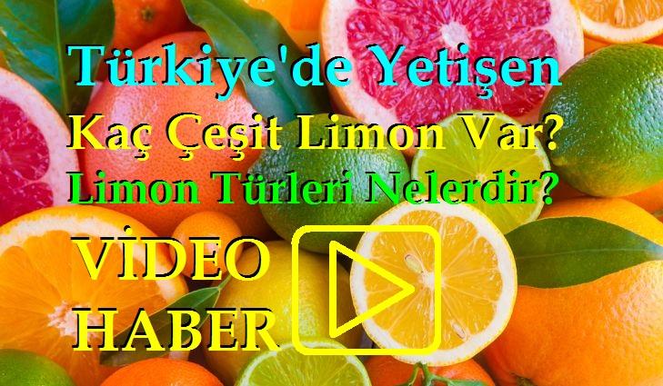 Türkiye'de Yetişen Kaç Çeşit Limon Var?