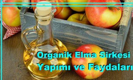 Organik Elma Sirkesi Yapımı ve Faydaları