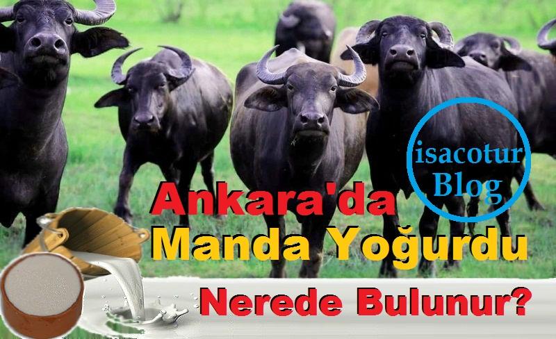 Ankara'da Manda Yoğurdu Nerede Bulunur?