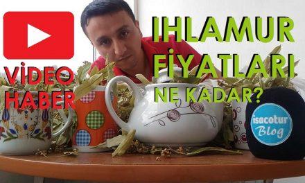 En Ucuz Ihlamur KG Fiyatı 2019