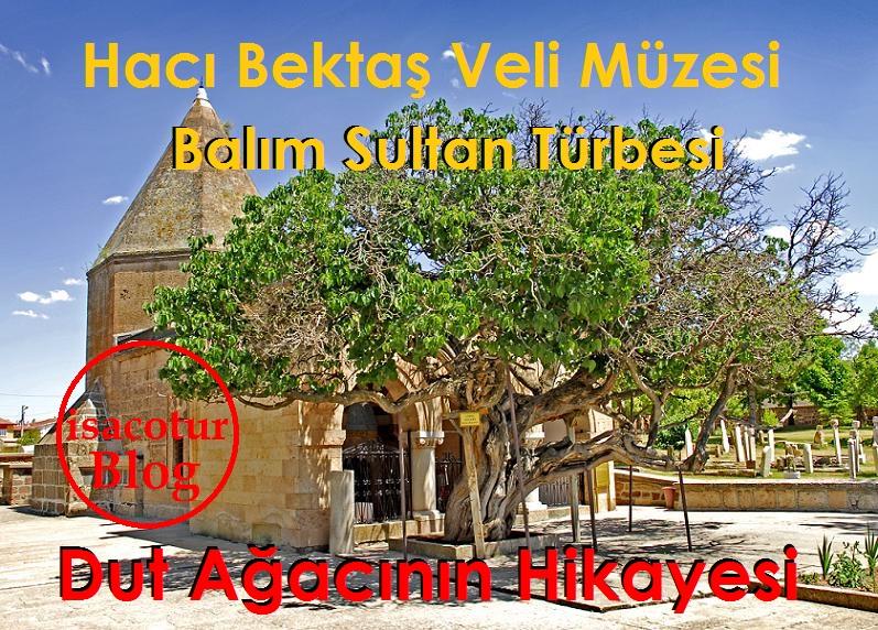 Hacı Bektaş Veli Müzesi Balım Sultan Türbesi Dut Ağacı Hikayesi