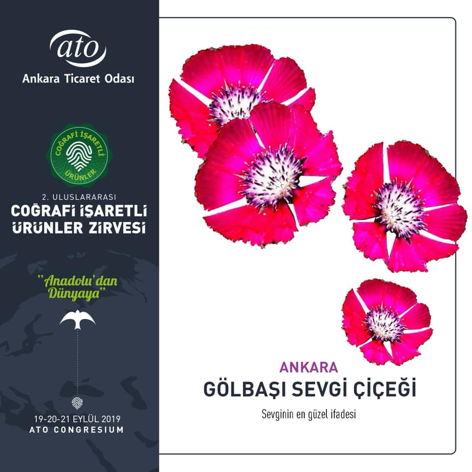 Ankara'nın Coğrafi İşaretli Ürünleri GÖLBAŞI SEVGİ ÇİÇEĞİ