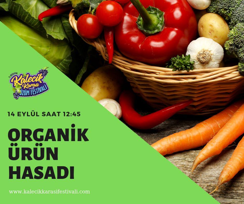 Organik Ürün Alanları Ziyareti ve Toplanması