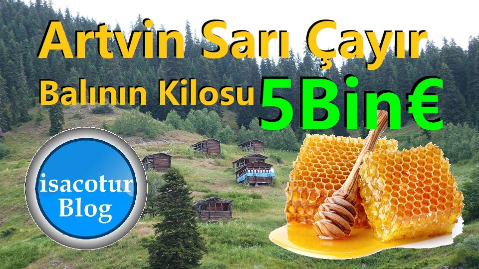 Artvin Sarı Çayır Balının Kilosu 5Bin Euro