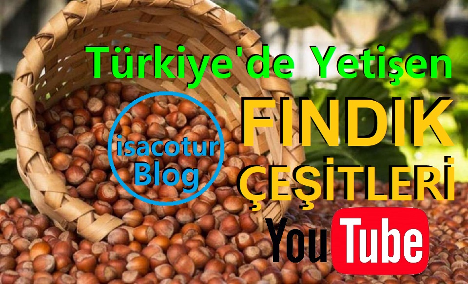 Türkiye'de Yetişen Fındık Çeşitleri