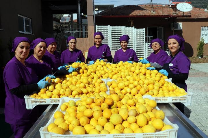 Bilara Kuru İncir Cipsi Üreteren 30 Kadına Geçim Kaynağı Oldu, limon kurusu